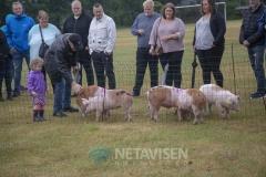 Sportsfest i Vesterhede 14. juni 2018