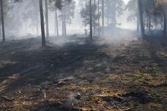 Brand i Lundgård Plantage mellem Donslund og Stenderup9
